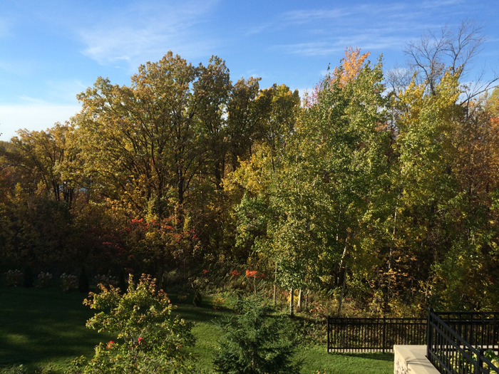 Fall view w sunny treed view