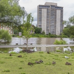 River Front & Geese