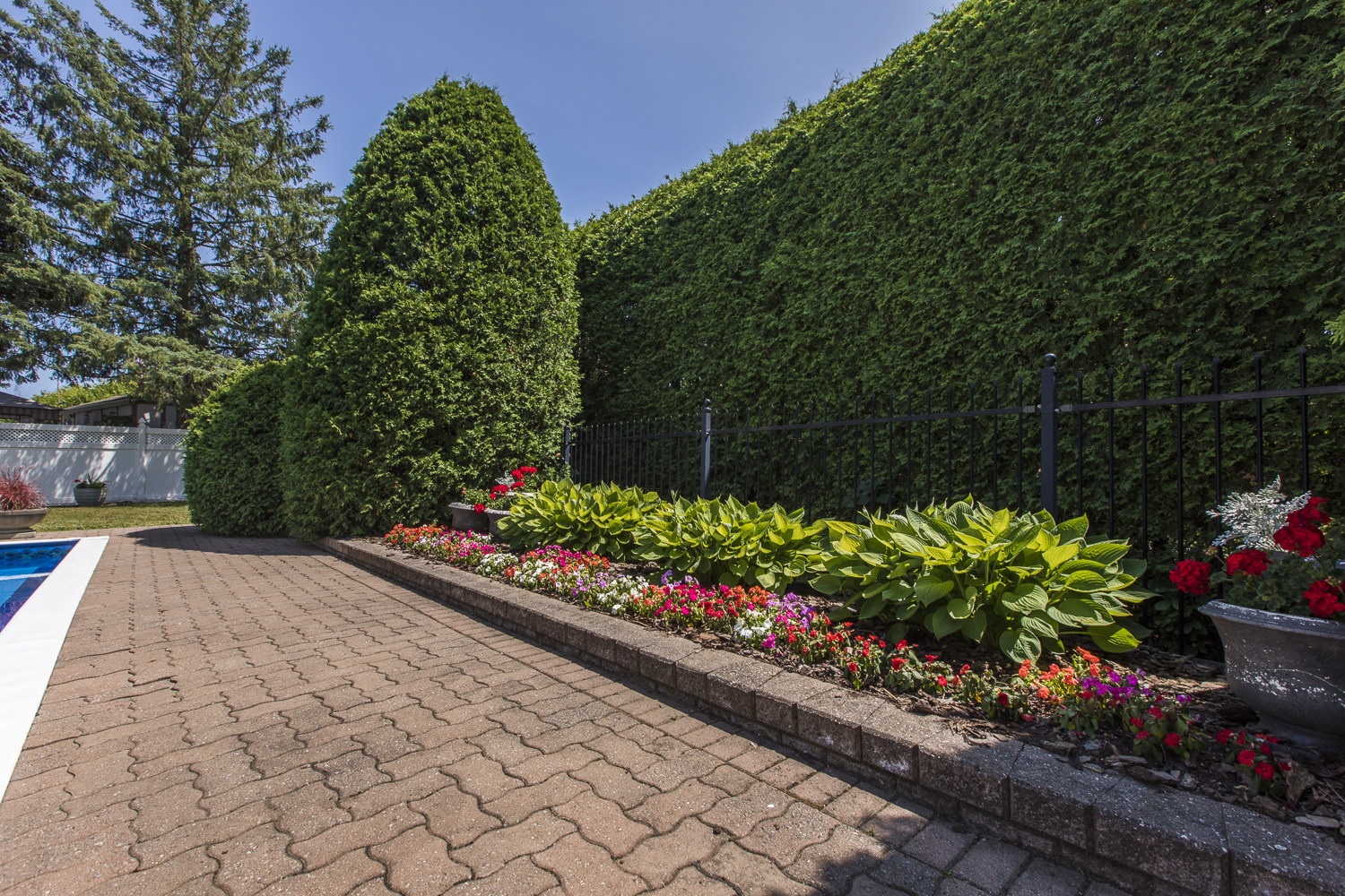 Backyard flower bed and hedge